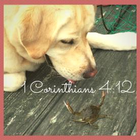 1 Corinthians 4-12 (1)