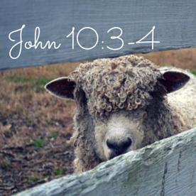 John 10-3-4