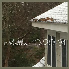 Matthew 10-29 (2)