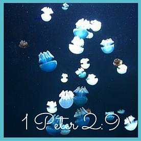 1 Peter 2-9