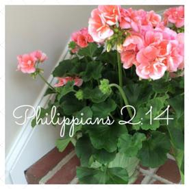Philippians 2-14